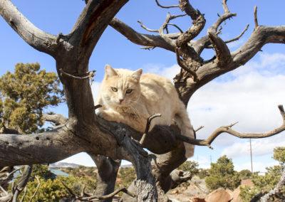 cougar ridge torrey utah cat in tree